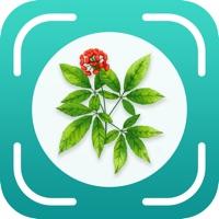 植物百科苹果版